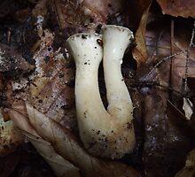 Mushroom Pair Underside for ID by Rusty Katchmer