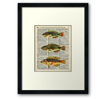 Colorful Fishes Over Old Encyclopedia Page Framed Print