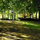 Shady path by Shulie1