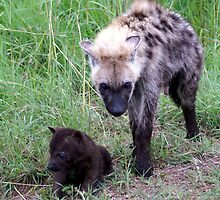 Young Female Hyena with Cub - Kruger National Park by eyedocbrian