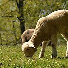 Grazing Lamb by Sheryl Gerhard