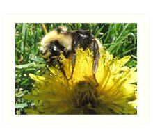 Buzzzzy As A Bee Art Print