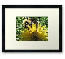 Buzzzzy As A Bee Framed Print