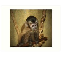 Calvin The Capuchin! Art Print