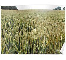 Field of grain, Hastings Poster