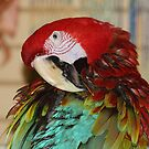 Green Winged Macaw by rasnidreamer