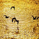 Golden Silhouette of ducks. by mikepemberton