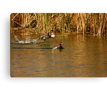 Red Head Male and Female. Canvas Print