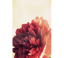 Her favorite flower is the Peony  Photographic Print