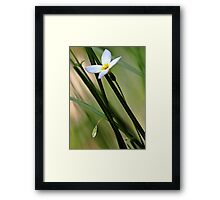 Solitary Bluet - In The Tall Meadow Grass Framed Print