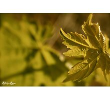 Young Vine Photographic Print
