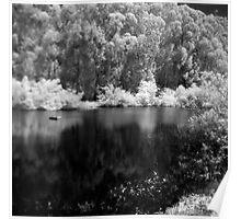 Pine Lake Poster