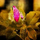 Emergence of Color by connie3107