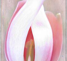 Tulip torso by Olga