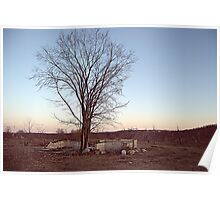 Old Orchard tree Poster