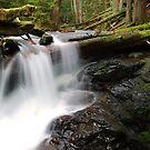 Panther Creek Falls 2 by Leon Heyns
