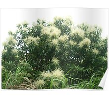 radiant white blossoms on lush green trees Poster