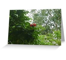 sensual red blossoms Greeting Card