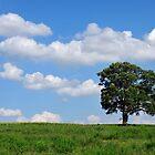 One tree hill by Jason  Burris