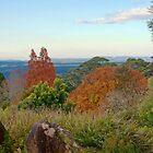 Blue Mountains Botanic Garden, Mt Tomah by jayneeldred