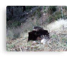 Tree Stump In The S an Bernardino Mountains Canvas Print