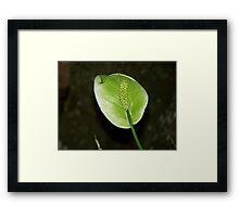 Spathiphyllum Framed Print