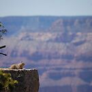 Squirrel  ...  livin it up in the Grand Canyon. by Amanda Huggins