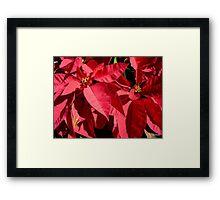 Red Poinsiettia - 1 Framed Print