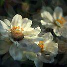 Abundance by Lozzar Flowers & Art