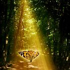 Butterfly in the Light Beam by JonnisArt