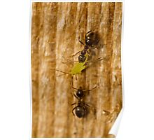 Ants 4 Poster