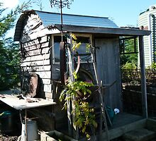 Garden Shed, Out the Back by DEB CAMERON