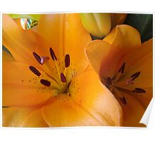 Orange Lilium. Poster