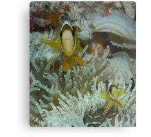 Nemo & Son Metal Print