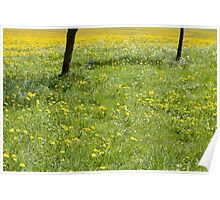 Spring Meadow Poster
