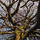 Tangled Branches by k8em