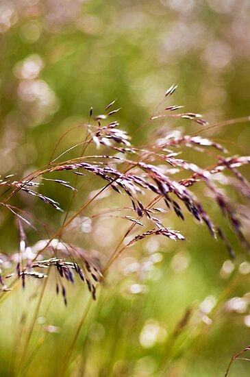 Rolling Grasslands - Puttenham Common by Melanie Simmonds