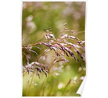 Rolling Grasslands - Puttenham Common Poster