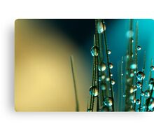 Grass Seed with blue Canvas Print