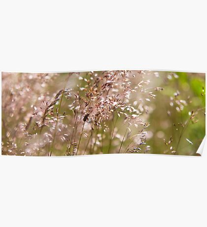 Insects Amongst the Grasses Poster