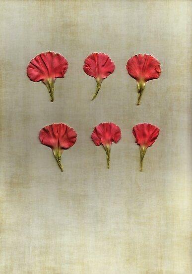 Six  by Anne Staub