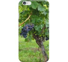 Grapevines At Harvest iPhone Case/Skin