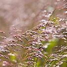 Shining Grasslands - Puttenham Common by Melanie Simmonds