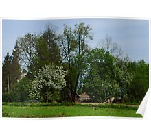 Spring in old farmstead (white bloom) Poster