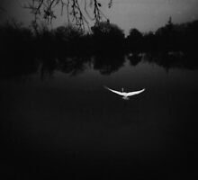Dawn flight by J. M. Golding