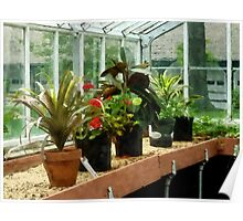 Plants in Greenhouse Poster