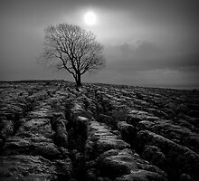 Malham Tree 01 - Yorkshire Dales, UK by ExclusivelyMono