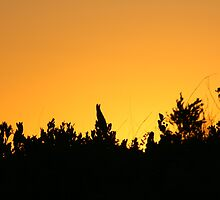 Sunset of fynbos by Matman15