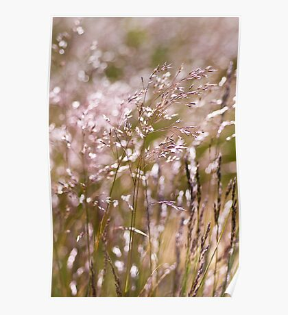 The Warmth of the Grasslands Poster