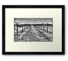 Dry Vines Framed Print